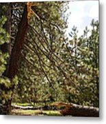 A Broken Tree Metal Print