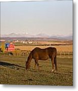 A Brown Horse Grazing In A Field In Metal Print by Michael Interisano