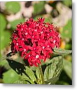 A Bunch Of Small Red Flowers Metal Print