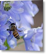 A Busy Bee Metal Print