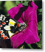 A Butterfly Lands On A Pink Flower Metal Print