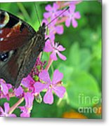 A Butterfly On The Pink Flower 2 Metal Print