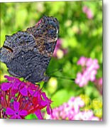 A Butterfly On The Pink Flower Metal Print