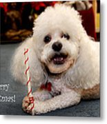 A Candycane For Puppy Metal Print