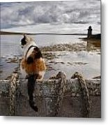 A Cat Is Perched On A Wall, Overlooking Metal Print