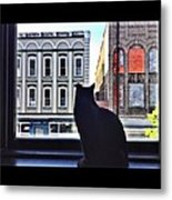 A Cat's View Metal Print by Joan Meyland