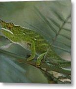 A Chameleon With Yellow Eyes Balances Metal Print