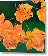 A Change Of Season Metal Print