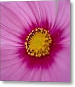 A Close-up Of A Pink Wildflower Metal Print
