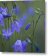 A Close Up Of Mountain Hairbells Dietes Metal Print
