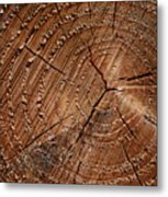 A Close Up Of Tree Rings Metal Print