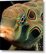 A Close-up View Of A Tropical Fish Metal Print