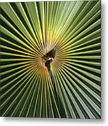 A Close View Of A Palm Frond Metal Print