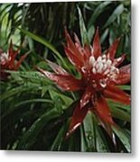 A Close View Of A Tropical, Red Flower Metal Print