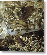 A Close View Of A Well-camouflaged Metal Print