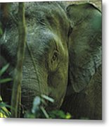 A Close View Of An Asian Elephant Metal Print