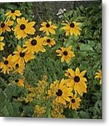 A Close View Of Black-eyed Susans Metal Print