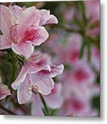 A Close View Of Pink Azalea Blossoms Metal Print