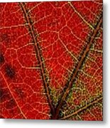 A Close View Of The Veins Of A Colorful Metal Print