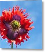 A Colorful Flower With Red And Purple Metal Print
