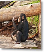 A Contemplative Youngster Metal Print