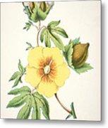A Cotton Plant Metal Print