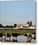 A Cow's Day At The Beach Metal Print