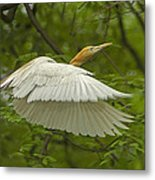 A Day With Egrets Metal Print