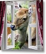 A Deer Enters The House Window. Metal Print