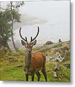 A Deer Stands In A Foggy Meadow By The Metal Print