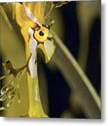 A Delicate Leafy Sea Dragon Head Detail Metal Print