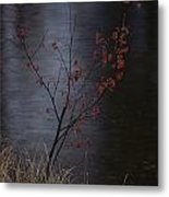 A Delicate Young Tree Blossoms Metal Print