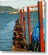 A Dock Of Sea Lions Metal Print by Jeff Swan