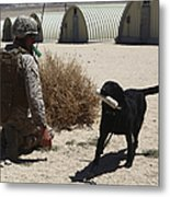 A Dog Handler Calls Over A Black Metal Print by Stocktrek Images