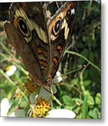 A Drop Of Nectar Metal Print