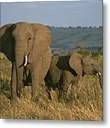 A Female Elephant With Her Baby Metal Print