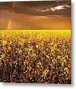 A Field Of Canola With A Rainbow Metal Print