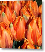 A Field Of Orange Tulips Metal Print
