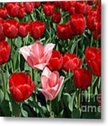 A Field Of Tulips Series 3 Metal Print