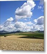 A Field Of Wheat Auvergne. France Metal Print
