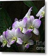 A Flight Of Orchids Metal Print