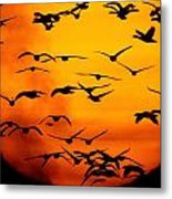 A Flock Of Geese Is Silhouetted Metal Print