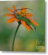 A Flower For Me Metal Print