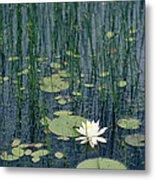 A Flowering Water Lily In Black Metal Print