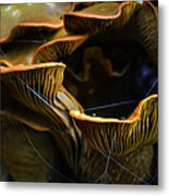 A Fly's Feast Metal Print