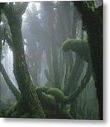 A Fog-enshrouded Rain Forest In Rwandas Metal Print