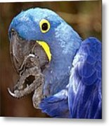 A Foot In Its Mouth Metal Print