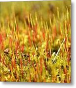 A Forest Of Moss II Metal Print