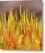 A Forest Of Moss Metal Print
