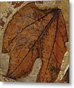 A Fossilized  Sassafras Leaf Metal Print